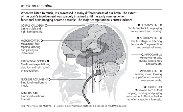 Music and our brains